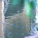 Летняя рыбалка на Калиновских разрезах