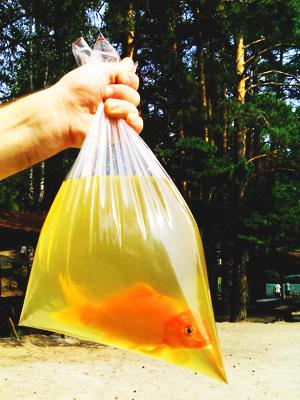 Детская рыбалка на живых золотых рыбок