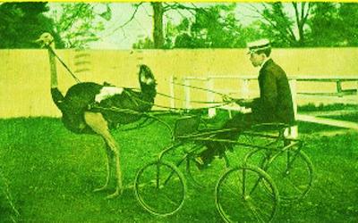 езда на страусах Калиновка