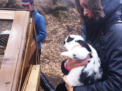 Калиновский кролик Роджер