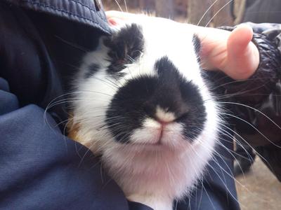 Усатый кролик на Калиновке
